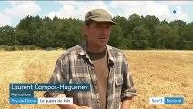 Puy-de-Dôme : 10 hectares de foin fauchés, bottelés et volés