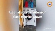 Ce chat court dans une machine à laver