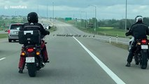 Motorists stop traffic allowing gaggle of geese to cross Canadian highway