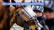 Le Bestiaire de la Préfecture de police