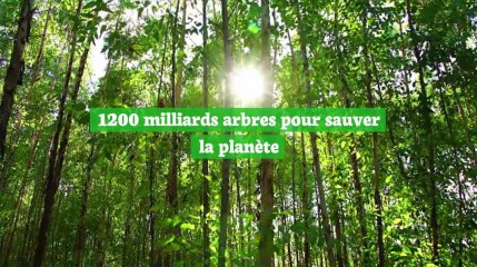 Planter 1200 milliards d'arbres pourrait sauver la planète