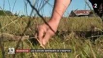 Sécheresse : les éleveurs manquent de foin et d'eau