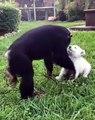 Admirez cette belle amitié entre un singe et une jeune chienne. Trop mimi !