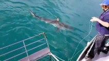 Il se filme dans une cage à requins... effrayant !