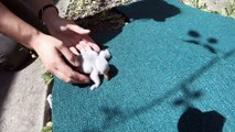 Flamingo Chicks Learn to Walk