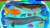 learn' Sea Animal Planet Farm Animals for - kids - children - boys - kids - children - boys - baby-, Shark, Horse, Whale, Fish, Toys