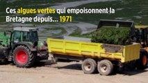Ces algues vertes qui empoisonnent la Bretagne depuis... 1971