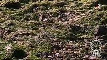 Bretagne : alerte aux algues vertes