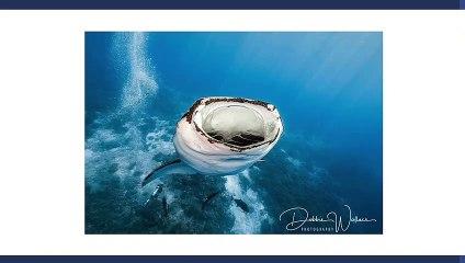 Essas fotos de um tubarão que parece engolir um homem viralizaram na internet 12759