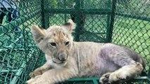 Harc az illegális vadállat-kereskedelem ellen