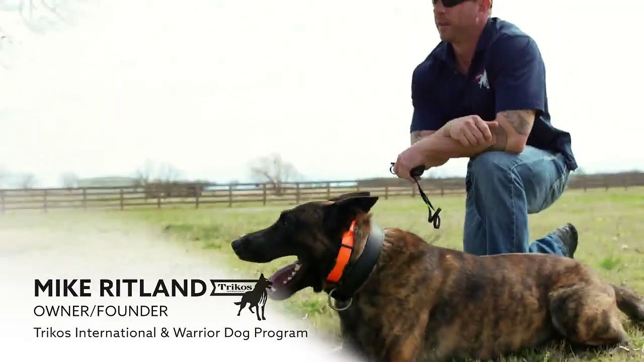 K9 Dog Training with Mike Ritland- E-collar fitting and set up