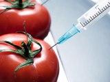 ¿Qué son los alimentos transgénicos?