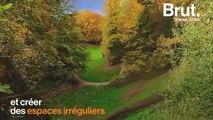 Le bois de la Cambre, le poumon de verdure de Bruxelles