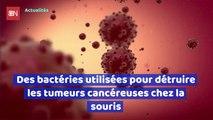 Des bactéries utilisées pour détruire les tumeurs cancéreuses chez la souris