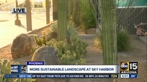 More sustainable landscape implemented at Sky Harbor