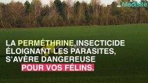 Attention ! Un insecticide peut tuer votre chat.