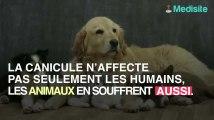 Canicule et animaux : comment protéger son chien ou son chat de la chaleur ?