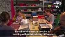 Wildlife hospital inundated with animals after June heatwave