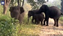 Irate elephants attack tourists on safari in India