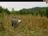 biodiversité du maïs au Mexique