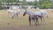 République tchèque: le Haras national de Kladruby nad Labem inscrit à l'UNESCO