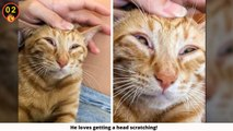 Hysterical Animal Photos That Blew Up The Internet