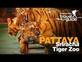 SRIRACHA TIGER ZOO PATTAYA   THAILAND   BANGKOK