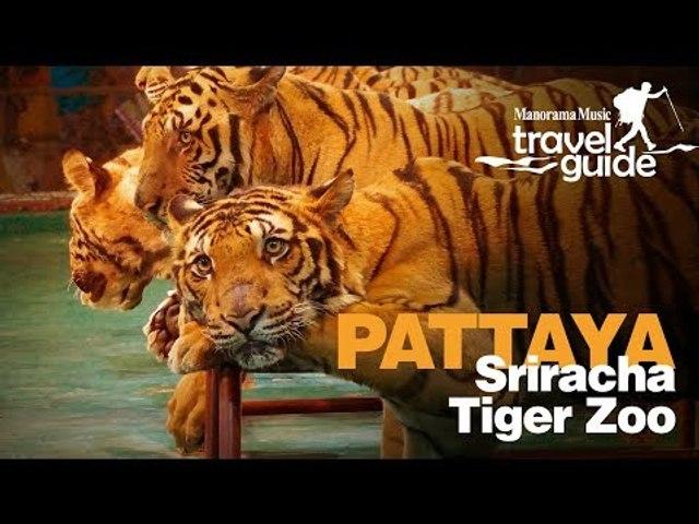SRIRACHA TIGER ZOO PATTAYA | THAILAND | BANGKOK