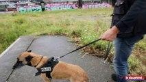 Le chien policier qui valait un million d'euros !
