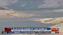 Health officials issue advisory for certain areas of Lake Isabella due to potential harmful algae