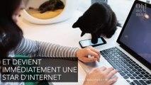 Narnia : Ce chat aux deux visages est la nouvelle star d'Internet ! (PHOTO)