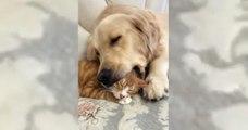 Il s'endort avec le chat entre ses crocs