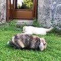 Quand un chiot frappe le lapin sur son visage, voici ce qui arrive !