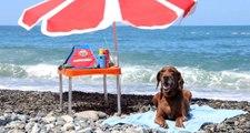Narkotik köpeği Vuslat, emekliliğini deniz kıyısında kutladı