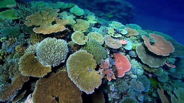 BBC Natures Microworlds (08of13) Great Barrier Reef