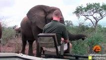 Au parc Krueger vous pouvez rencontrer les éléphants de très près...