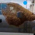 Il découvre son pick-up couvert de milliers d'abeilles