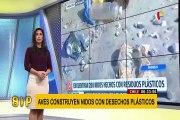 Chile: aves están construyendo nidos con deshechos plásticos