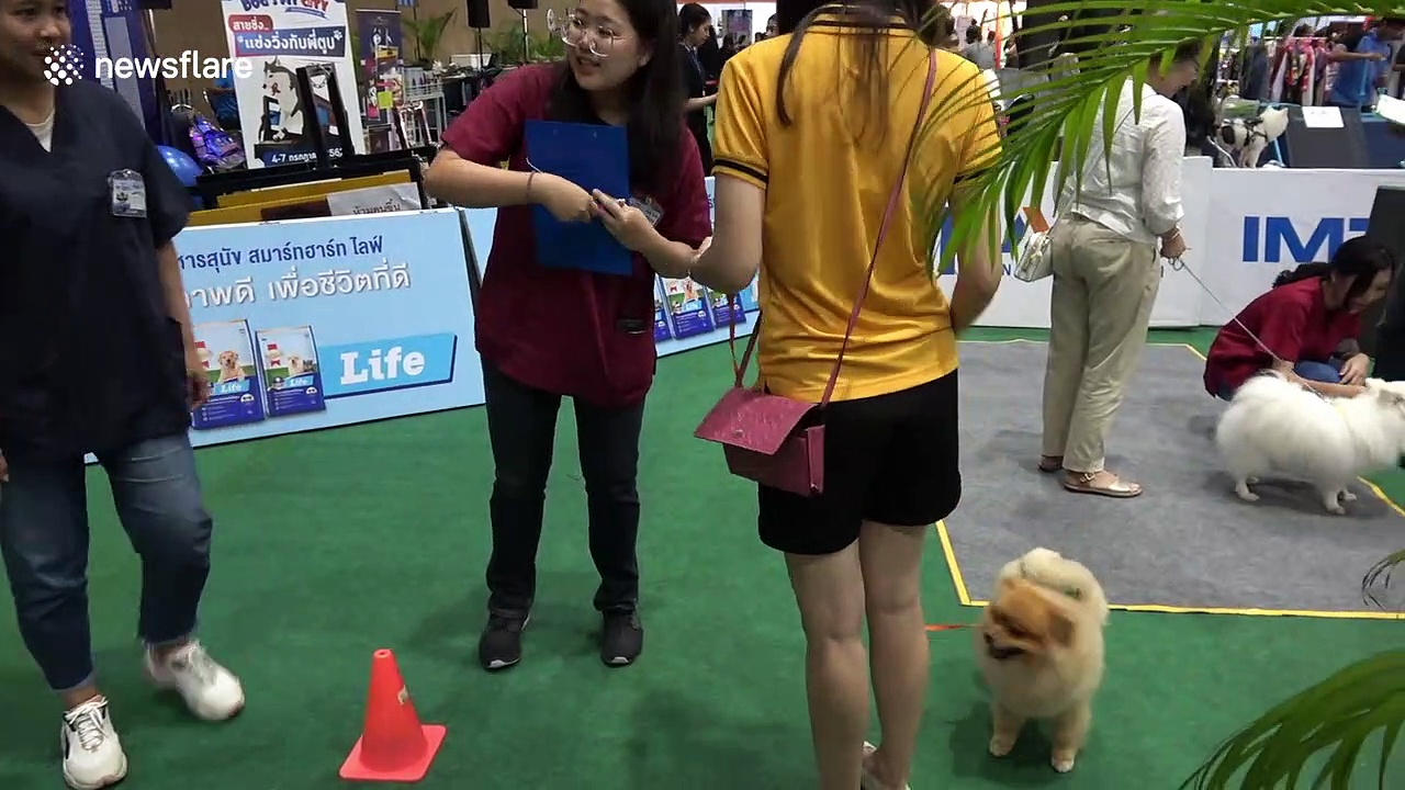 Thailand International Dog Show determines who is the very best boy