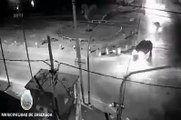 Ensenada : pelea de tránsito que dejó en coma a un taxista