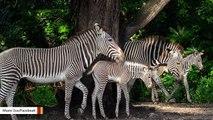 Miami Zoo Celebrates Baby Boom