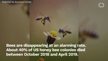 America's Honeybees Are Dying At An Alarming Rate