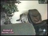 chat, chien et leurs betises