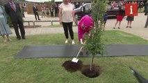 Queen plants tree