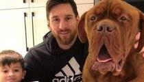 تعرّفوا على كلاب لاعبي كرة القدم