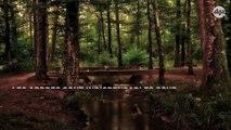 Planter des arbres pourrait significativement améliorer la qualité de l'eau