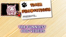 FUNNY DOGS are here, BE READY TO DIE FROM LAUGHING! - So SUPER FUNNY DOG videos