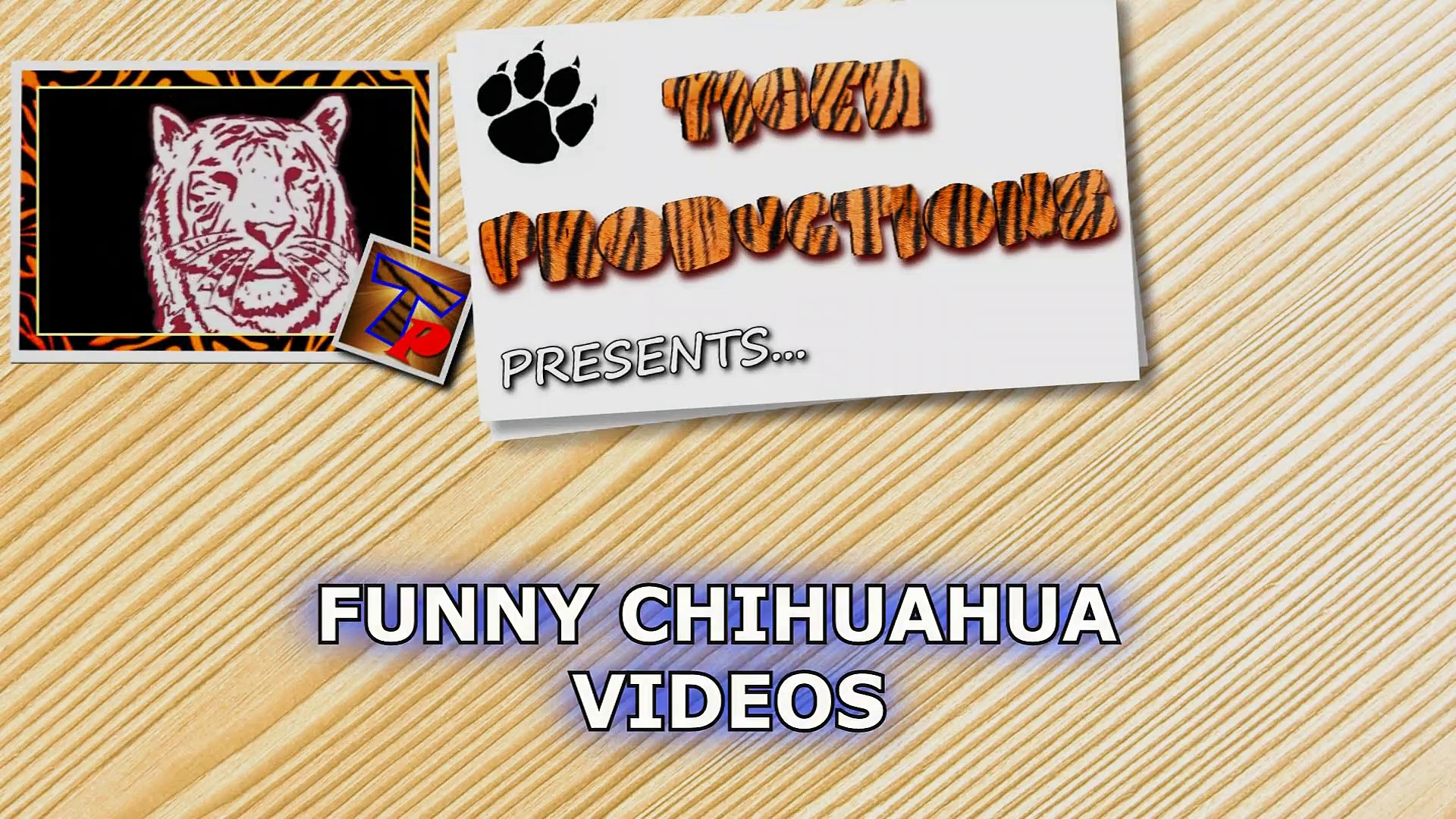 Are CHIHUAHUAS the FUNNIEST DOGS – Funny CHIHUAHUA DOG videos that will make you LAUGH LIKE HELL