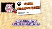 From 1 to 100, you'll LAUGH 1000! - ANIMAL VIDEOS SO FUNNY that you'll BE SHOCKED!