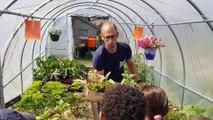 Comment planter et cultiver des salades ?